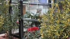 giyotin-cam-balkon-sistemleri-009